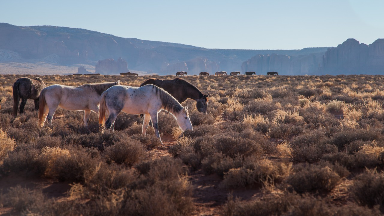 Natural State Nomads - Monument Valley Wild Horses
